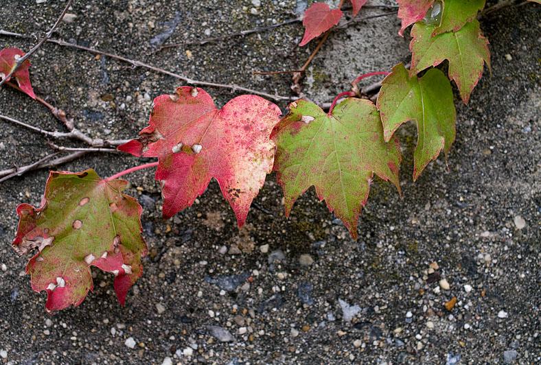 2009_1014_3936_leaves