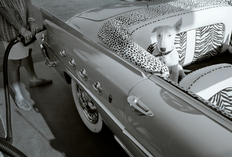 Dog in Car_Gordon Lewis Photo