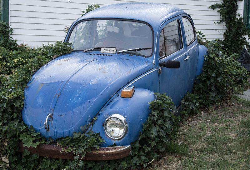 Blue Bug #3